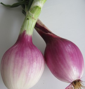 CSA red onions